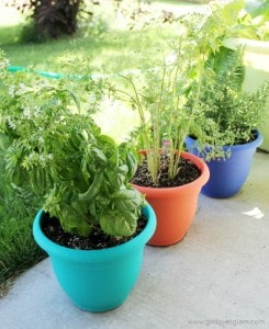 Growing Herbs at Home on www.girllovesglam.com