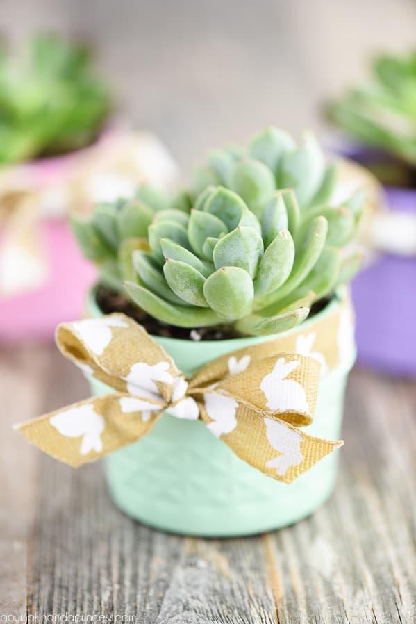 Spring Mason Jar Succulent Planter