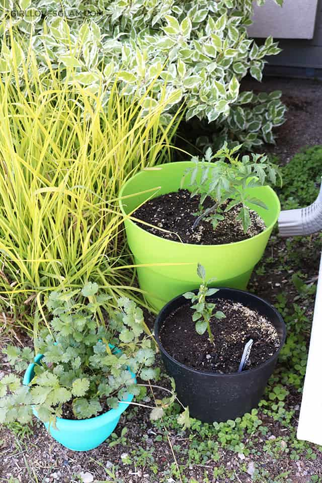 Container Gardening for Rental Homes