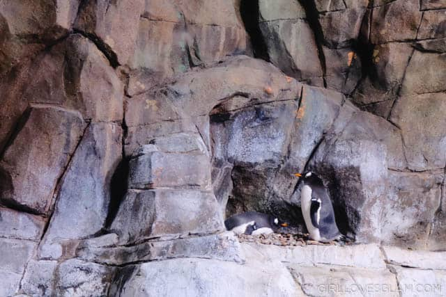 Living Planet Aquarium Penguins on www.girllovesglam.com