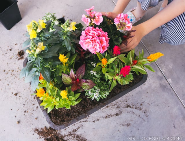 Planting in a planter box